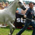 X Jubileuszowy Świętokrzyski Młodzieżowy Championat Koni Małopolskich